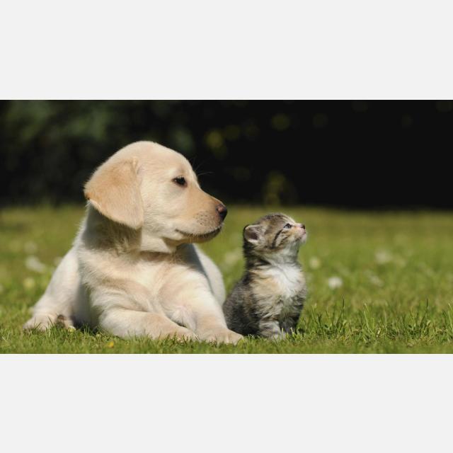 Promotor/a de ventas - alimentación mascotas Mijas (sábados de octubre)