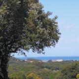 Isla  Quejo avatar icon