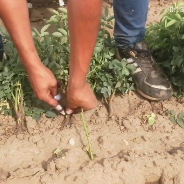 Ayudante de horticultura