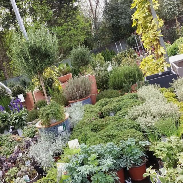 Plantas de exterior y bricojardineria