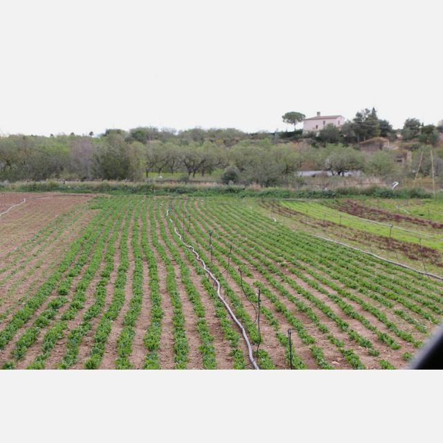 Agricultor/a