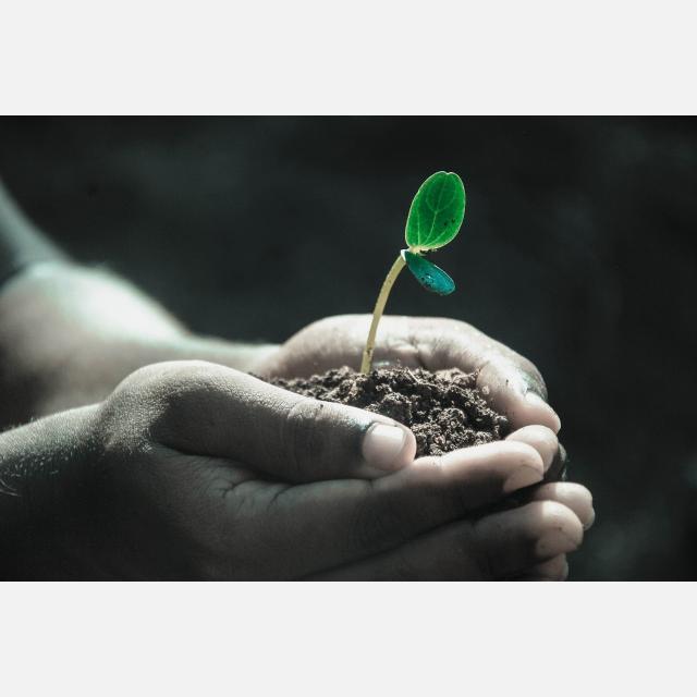 Ayudante/a de Jardinería