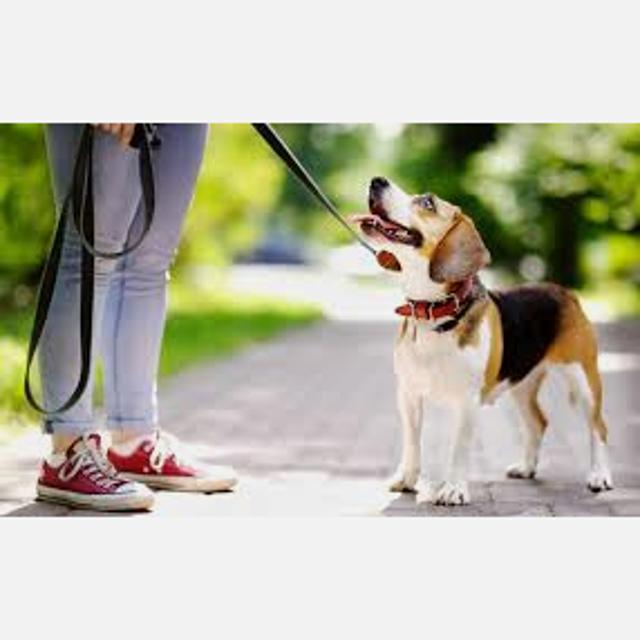 Servicio de mascotas