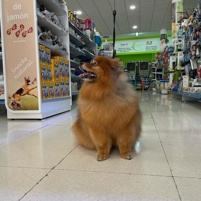 Peluqueria canina y tienda de mascotas